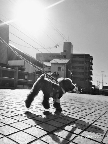 anco散歩日和_5082.jpg