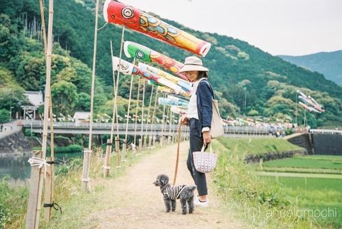 phonto鯉のぼりanco_10955.JPG