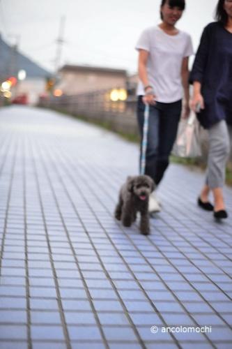 DSC_3696_252みんなで散歩.jpg
